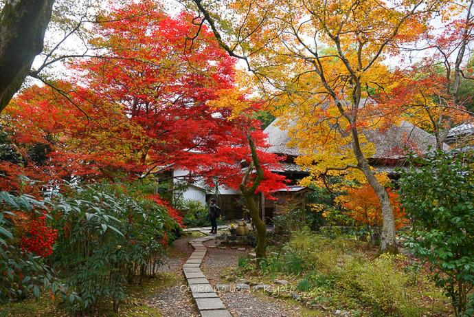 1124京都11月-39