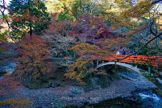 そうだ京都いこう20192019-69