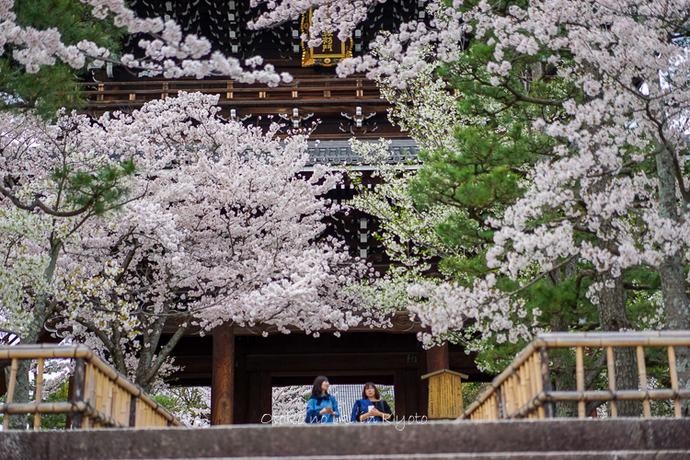 0407京都4月-105