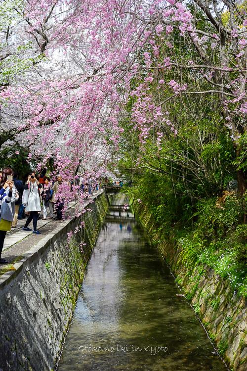 0407京都4月-75