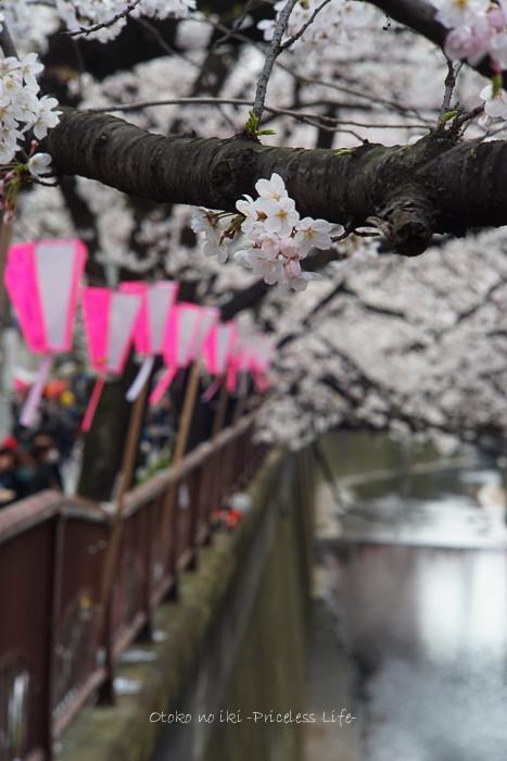 0330桜23月-5