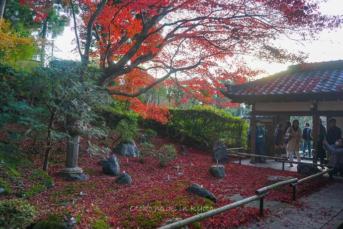 京都112511月-4