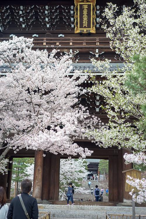 0407京都4月-104