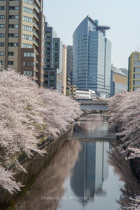 花見2019-6