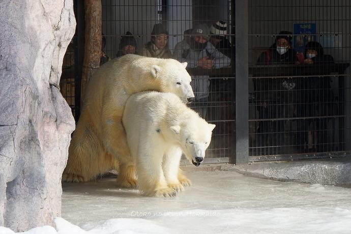 旭山動物園2017-11