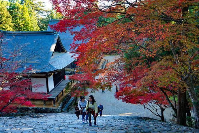 そうだ京都いこう20192019-79