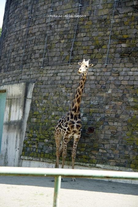 0831-1円山動物園
