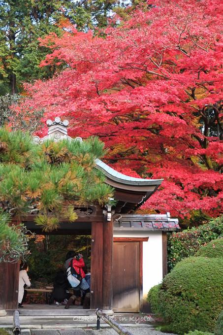 0602京都11月-1