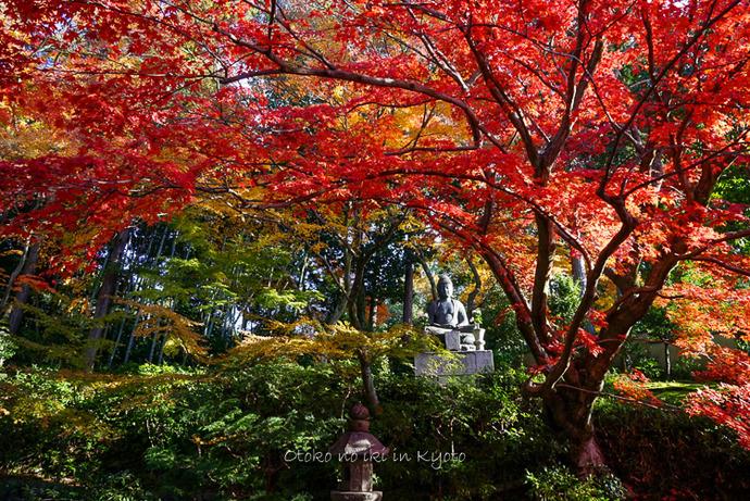 1123京都11月-14