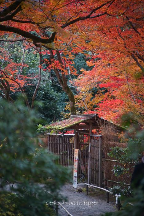 1124京都11月-29