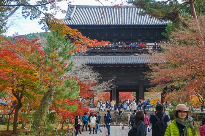 京都1125朝11月-2