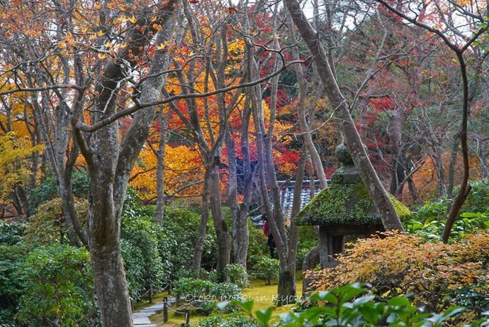 1124京都11月-35