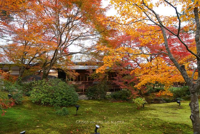 1124京都11月-30