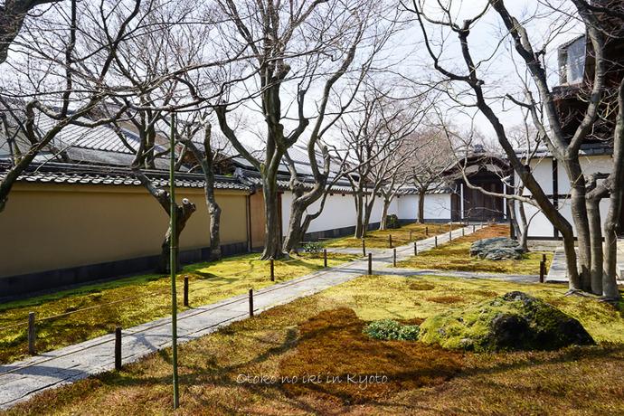 0329京都3月-55