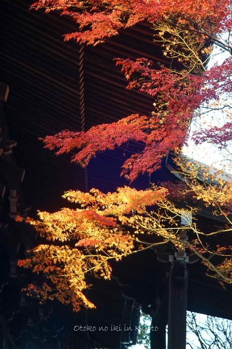 京都112511月-25