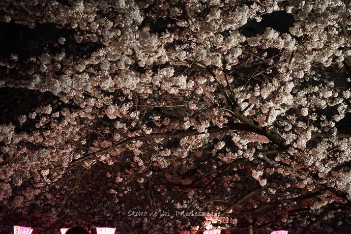 0330桜23月-59