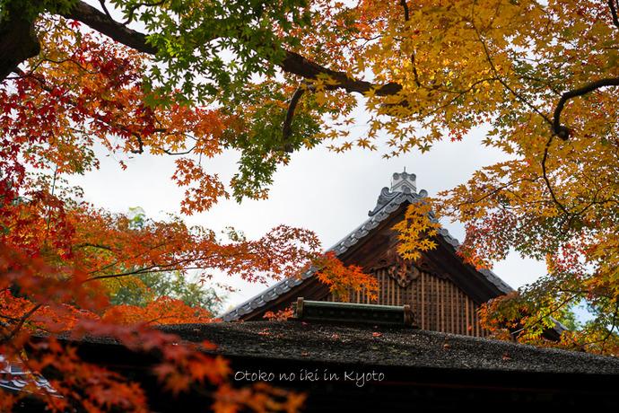 そうだ京都いこう20192019-236