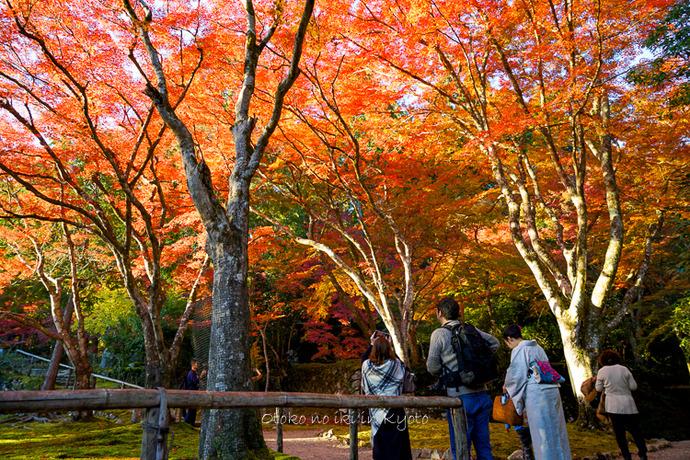 そうだ京都いこう20192019-91