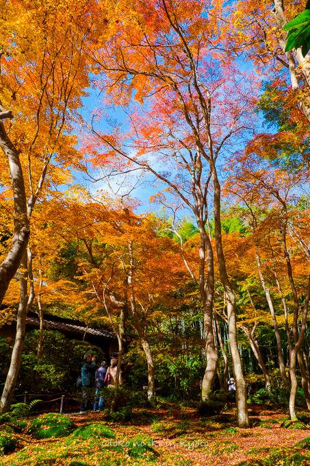 1130京都-5