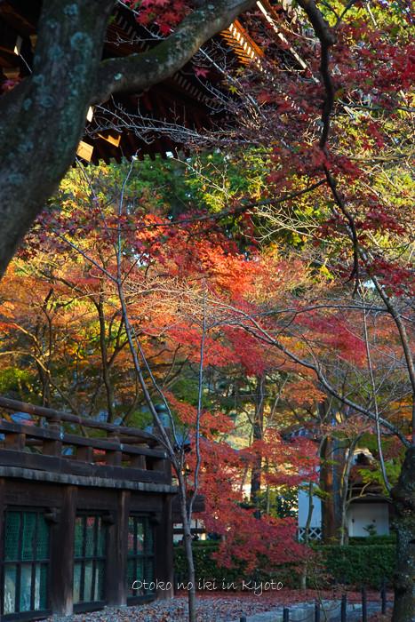 京都112511月-23