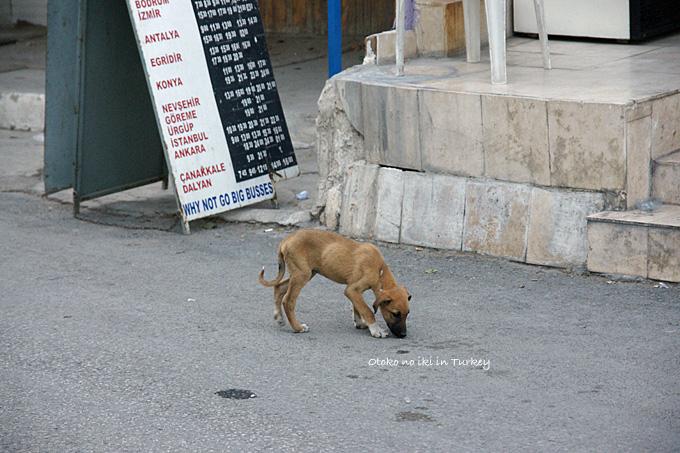 0223-11犬