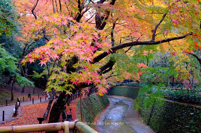 1128京都-2