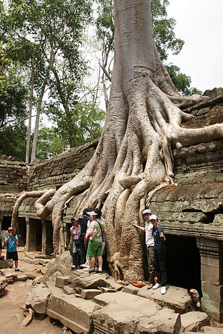 0724-11木の根