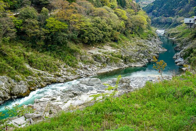 徳島2019-13