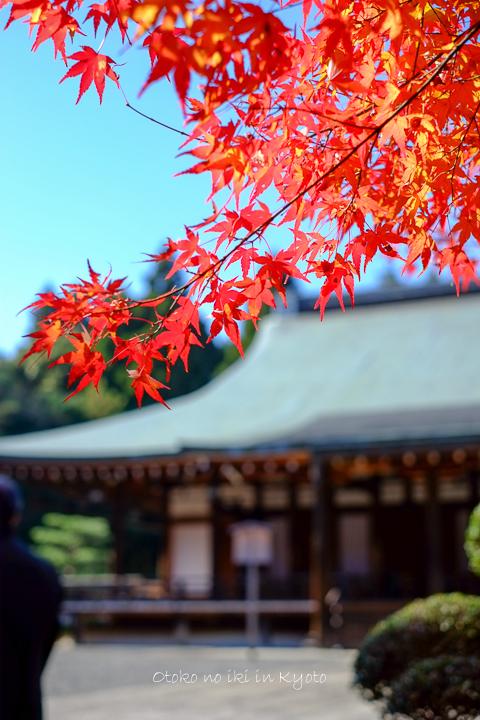 1102苔寺11月-32