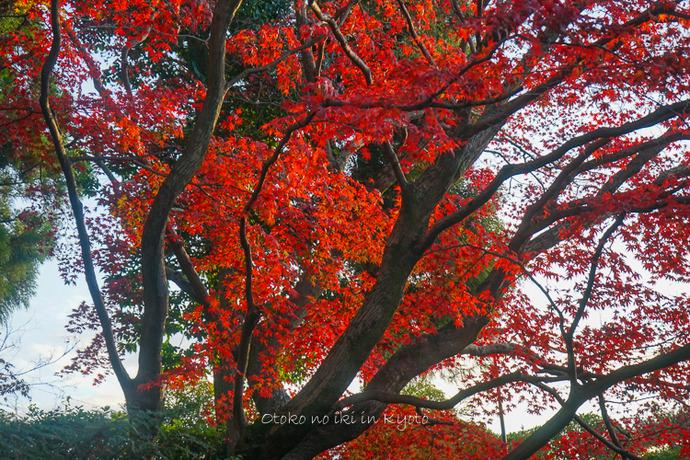 京都112511月-5