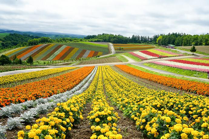 Hokkaido_Summer20202020-62