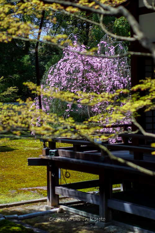 0407京都4月-38