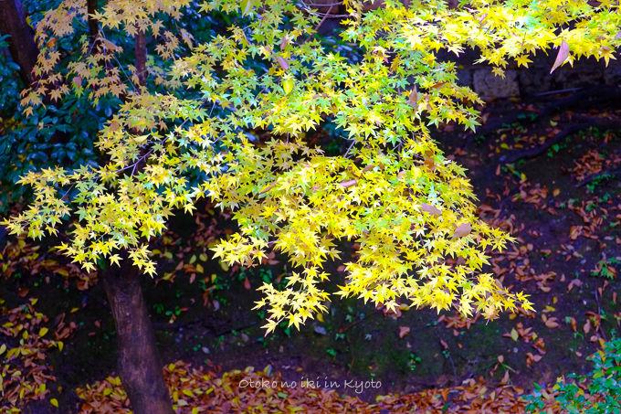 11月京都2012北野天満宮-19