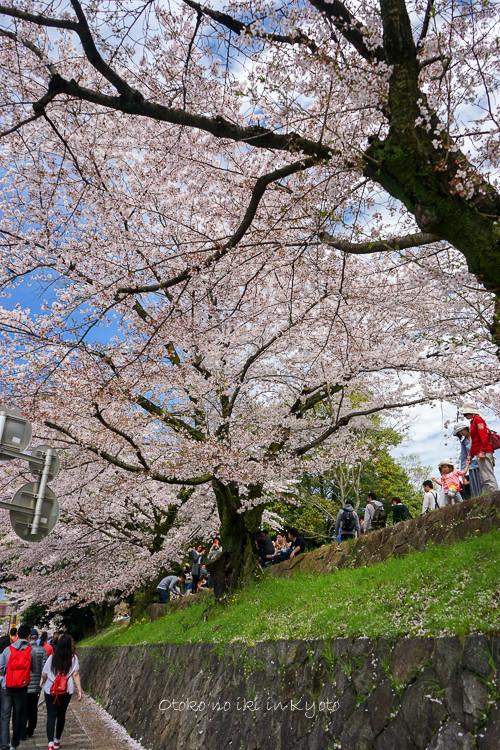 0407京都4月-46