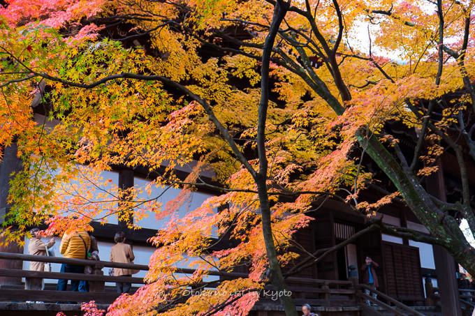 0404京都紅葉11月-12