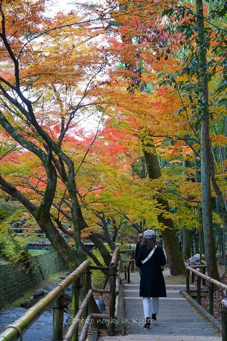 そうだ京都いこう20192019-228