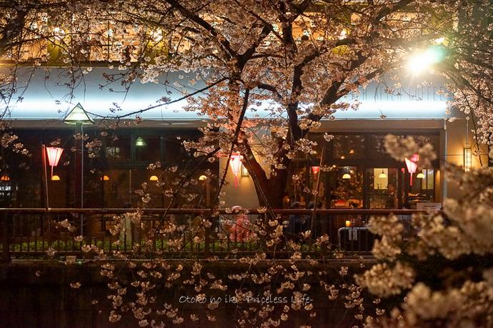 0330桜23月-77