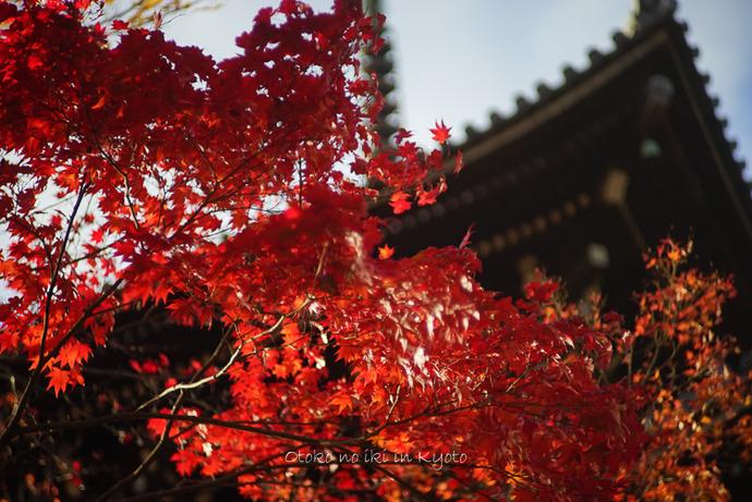 1123京都_2_11月-8
