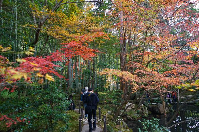 1108京都11月-26