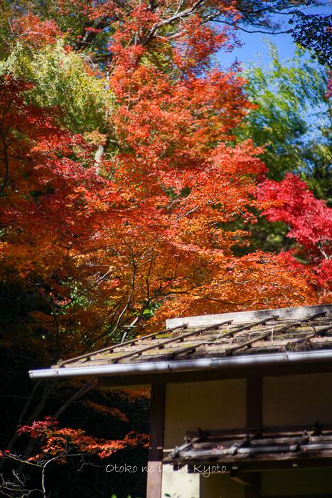 そうだ京都いこう20192019-43
