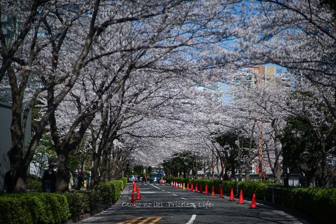花見目黒川2019-2
