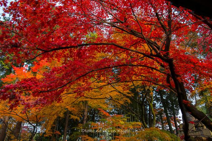 0602京都11月-3