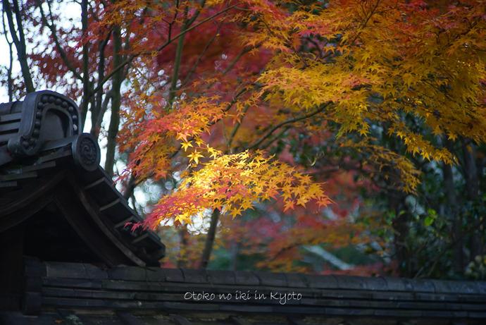 1123京都11月-32