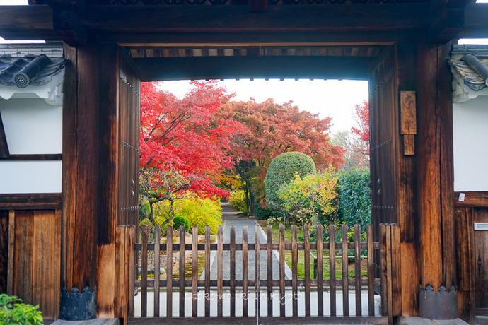 1117妙心寺11月-20