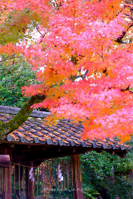 11月京都2012北野天満宮-33