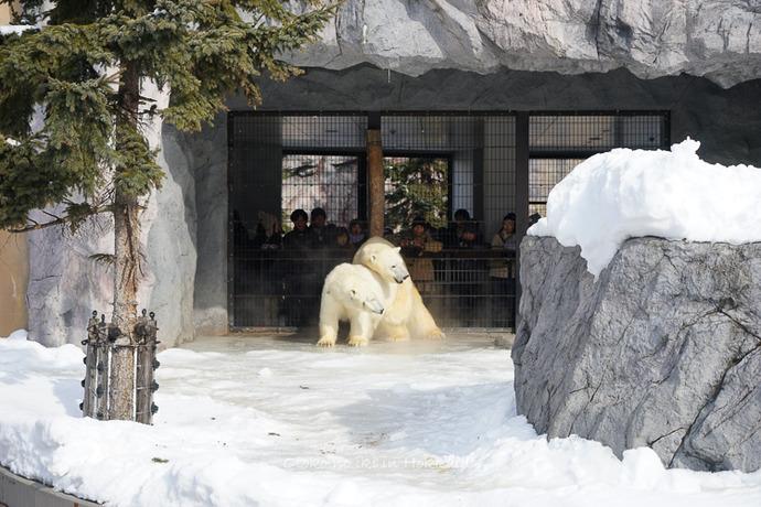旭山動物園2017-12