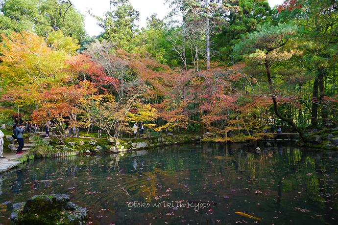 1108京都11月-31