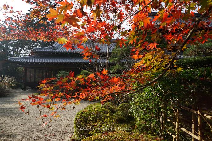 1108京都11月-32