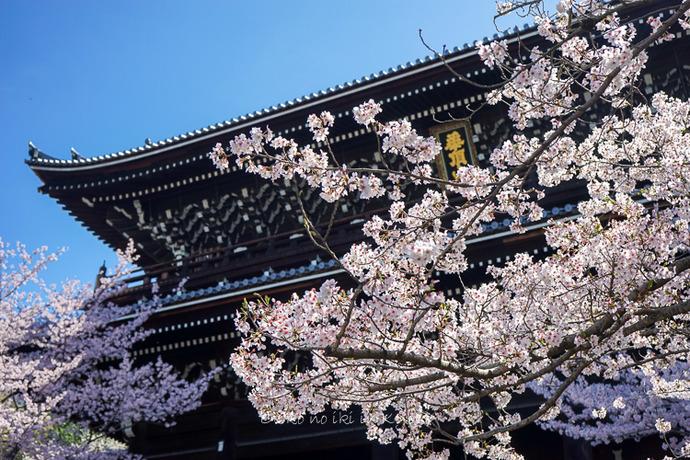 0407京都4月-25