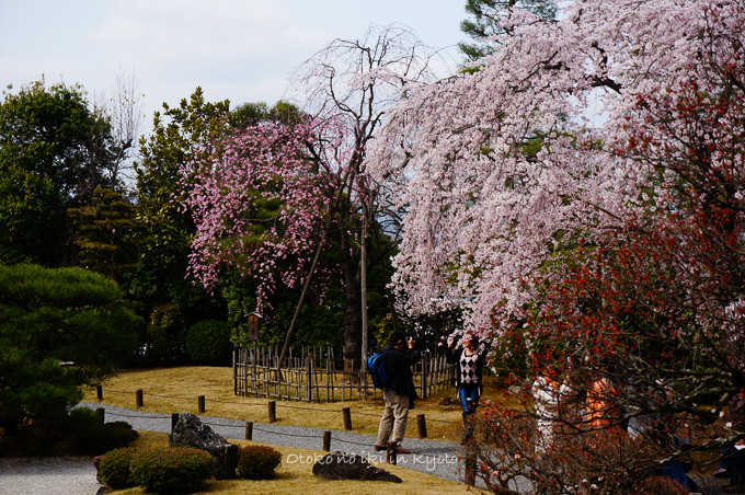 0324京都3月-25